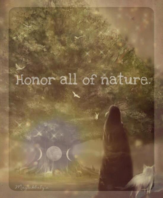 nature91